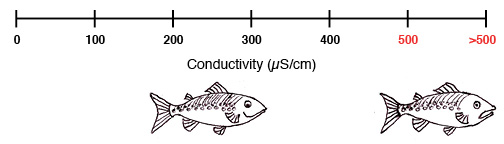 conductivityfish